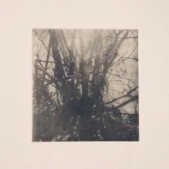 Träskträd - Fotogravyr med fotopolymer