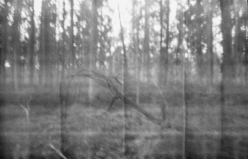 Tidlöshetens natur #1